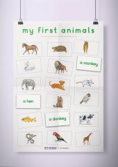 פוסטר שמשונית –  My First animals